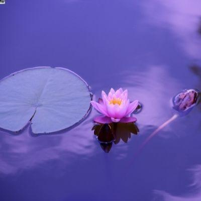 vođena meditacija joga nidra